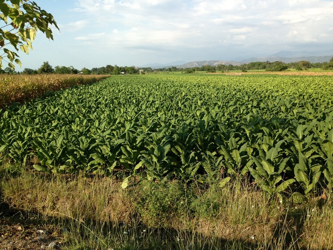 RUSH SALE! Farm Lot in Balaoan, La Union